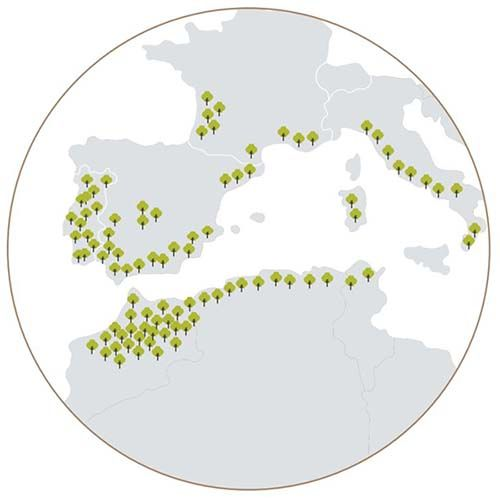 mapa-distribucion-mundial-del-alcornocal